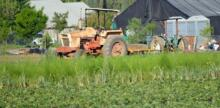 Small Farmers at the Forefront of Riverside's Urban Agriculture