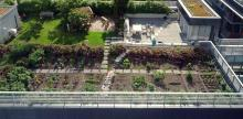 On a Mission to Green Our Nation's Capitol: A Q&A With Rooftop Roots