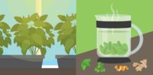 Grow a Tea Garden