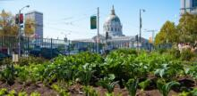 Can Cities Feed Themselves? A Look at Urban Farming in 5 Major American Urban Centers