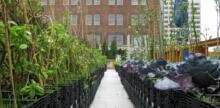 Baltimore Combats Food Deserts with Urban Farming Tax Break