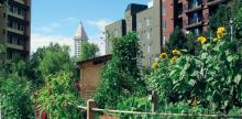 5 Urban Agriculture Strategies to Grow Your City's Food Supply