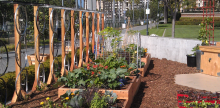 Pioneering San Diego Business Builds Urban Edible Landscapes
